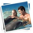 Dolphin Encounter Los Cabos