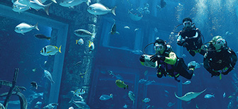 Marine Animal Adventures Dubai