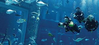 Marine Animal Adventures Dubai